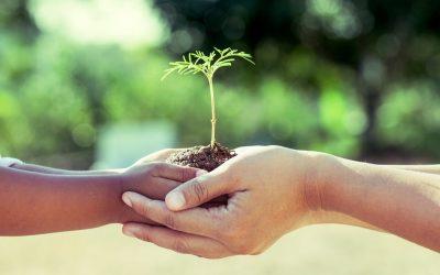 klein plantje in handen